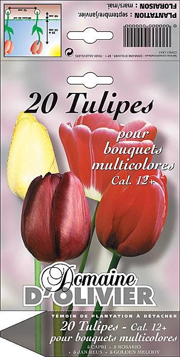 DomOlivier chromo tulipes