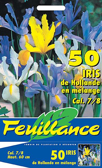 Feuillance chromo iris