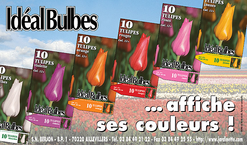 IdealBulbes encart 204x120